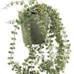 растение SVENN